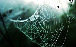 web, drops, forest, rain