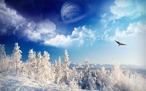 invierno, planeta, nieve, Los rboles, guila, cielo