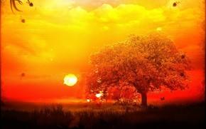 drzewo, przetwarzanie, soce