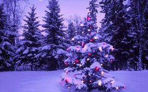 новый год, лес, елка, огни