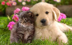 щенок, котенок, парочка, малыши, фон, трава, цветы
