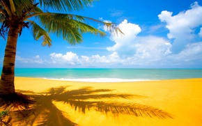 palm, Sea, beach, sand, clouds, tropics