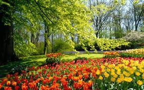 деревья, цветы, тюльпаны, краски, яркие