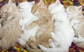 котята, малыши, спящие котята, нежность, животные