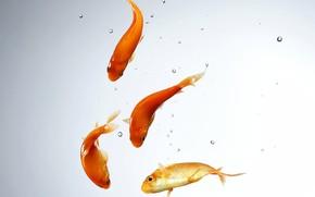 Fisch, Wasser, Minimalismus