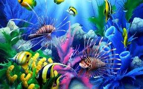 Sea, fish, подводный мир