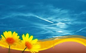 лето, цветы, небо