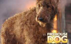 Пожарный пес, Firehouse Dog, film, movies