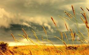 колосс, трава, желтый