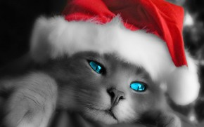 capuchon, yeux, Nouvel An