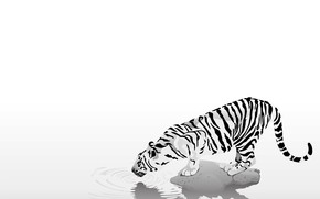 animals, tiger, strips, black and white, thirst, caution, simplicity