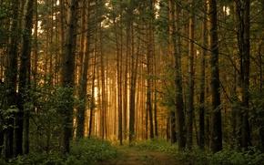 bosque, Los rboles, las lagunas