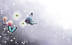 Mariposas, los patrones de