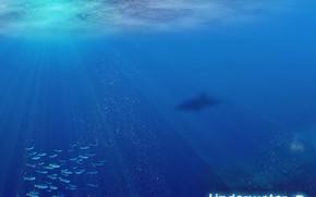 water, ocean, fish