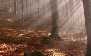 autunno, raggi, fogliame, alberi, tronchi, giallo foglie cadute, foresta, ramo