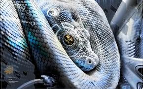 serpiente, tratamiento, Techno