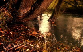 nature, autumn, band, strips, yellow fallen leaves, river, water, Lake