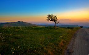 champ, route, prairie, Fleurs, solitaire, arbre