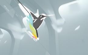 птица, колибри, минимализм, вектор