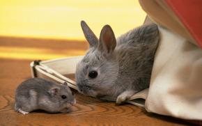 кролик, хомяк, серые, малыши