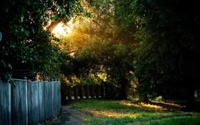 деверья, трава, свет, солнце, забор