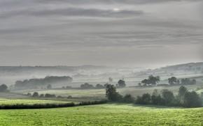 nebbia, alberi, campo