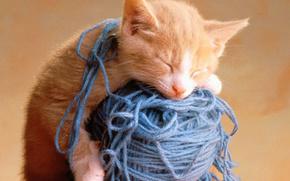 кот,  нитки,  спит