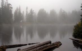 озеро, вода, лес, туман