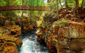 ponte, piccolo fiume, pietre, foresta