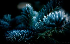 tree, ель, Needles