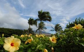 tropics, Palms, Flowers