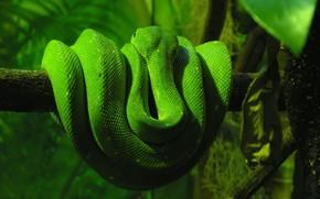 Serpente, verdura, albero, serpente