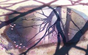 Makoto Shinkai, reflexo, folhas de cerejeira.