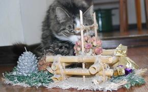 Кошка,  взгляд,  колодец,  цветок,  ёлка