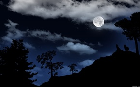 night, Trees, clouds, moon, Wolves