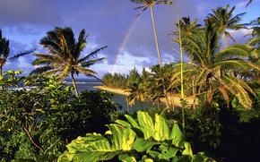 Tahiti, Palms, summer, tropics