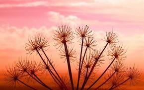 impianto, tramonto, cielo