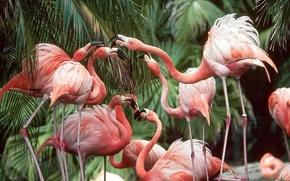 粉红色的火烈鸟, 鸟类
