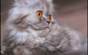 Koshak, occhi, gattino