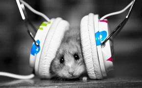 mouse, cuffia, ascoltare