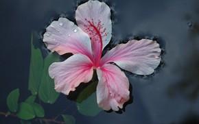 fleur, eau, feuillage
