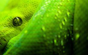 animals, snake, Green