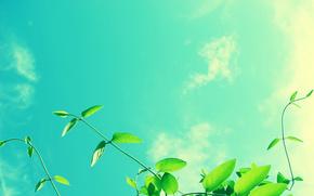 greens, sky, sheet