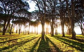деревья,  стволы,  свет,  солнце