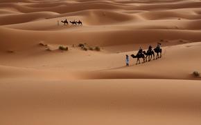 Tourists, desert