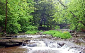 foresta, fiume, ponte