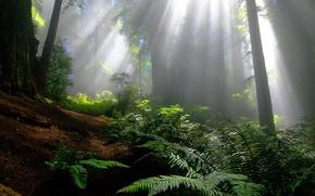 лучи,  деревья