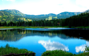 lake, beautiful, Duck, swim