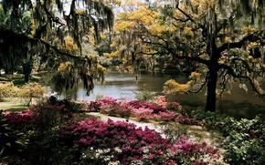 Flores, Los rboles, lago