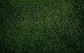 struttura, prato, erba, verdura, carta da parati